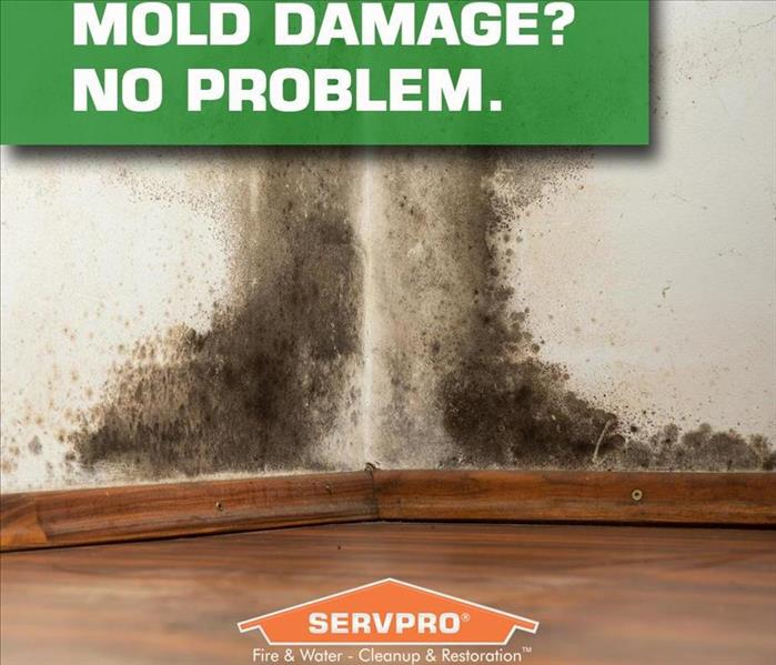 Mold Remediation Does Your Port Charlotte Home Have A Mold Problem?