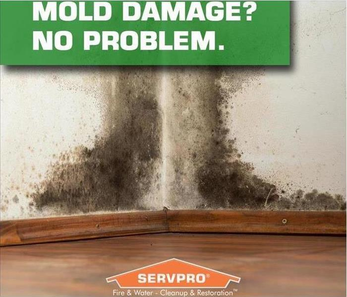 Mold Damage on Wall